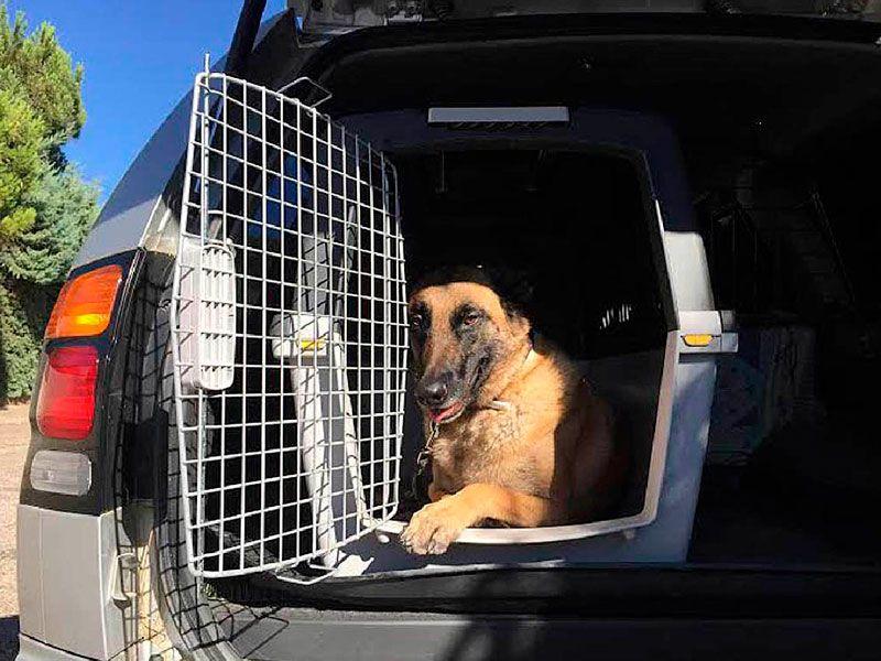 Como transportar a tu mascota